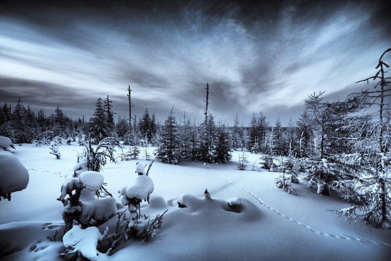 Fotografie von Michael von Hassel - Ein Wald am nördlichsten Punkt von Sibirien